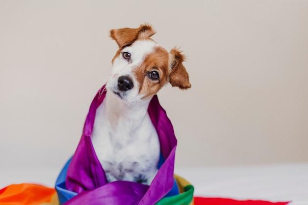 Lindo perro jack russell envuelto en la bandera lgbt del arco iris en la cama blanca en el dormitorio. celebrar el mes del orgullo y el concepto de paz mundial. el amor es el amor