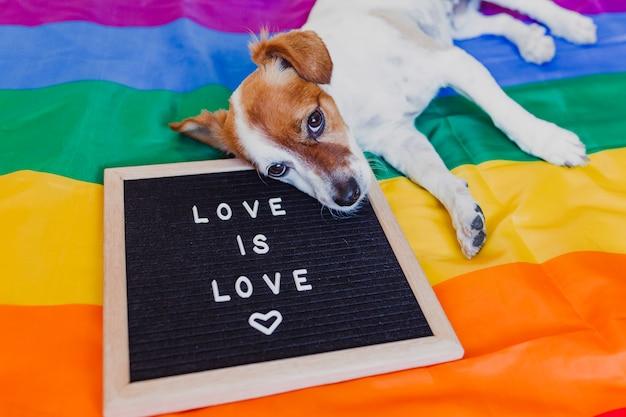 Lindo perro jack russell sentado en la bandera lgbt del arco iris en el dormitorio. tablero de cartas además con el mensaje amor es amor. celebra el mes del orgullo y el concepto de paz mundial