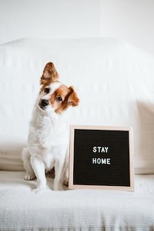 Lindo perro jack russell en el sofá con el tablero de letras con el mensaje stay home.