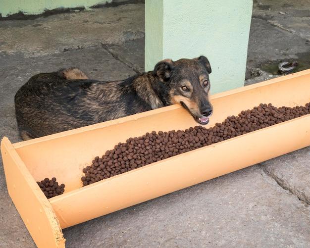 Lindo perro junto a la comida a la espera de ser adoptado.