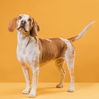 Lindo perro con ojos pensativos
