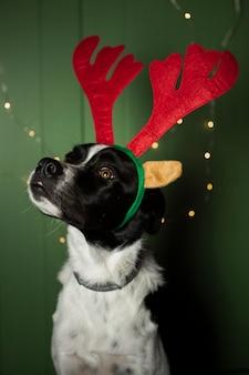 Lindo perro con orejas de reno en el interior