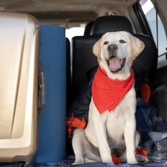 Lindo perro con pañuelo rojo mirando a otro lado