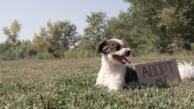 Lindo perro en pasto con signo de adopción