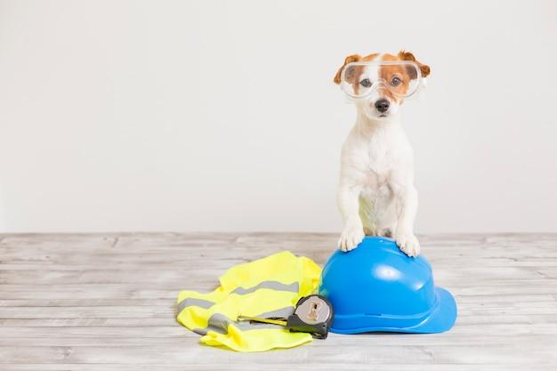 Lindo perro pequeño con equipo de protección