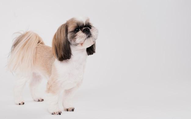 Lindo perro pequeño de pie