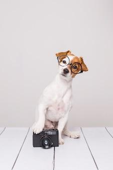 Lindo perro pequeño sentado en el piso blanco y con gafas. parece inteligente y curioso. cámara vintage a su lado. mascotas adentro