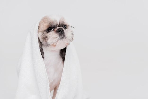 Lindo perro pequeño sentado en una toalla