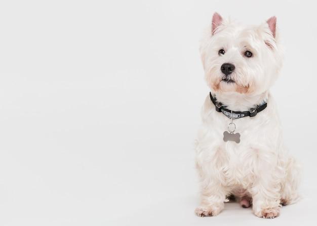 Lindo perro pequeño sentado