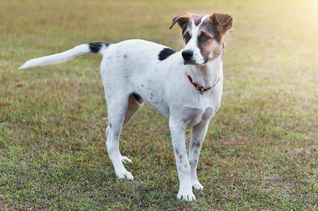 Lindo perro de pie en el campo de hierba