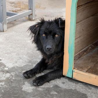 Lindo perro en refugio esperando ser adoptado por alguien