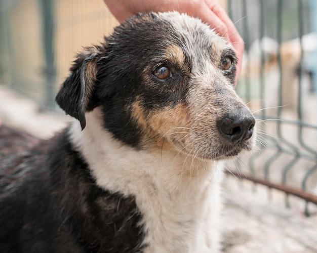 Lindo perro de rescate siendo mascota en el refugio