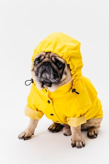 Lindo perro sentado en traje amarillo