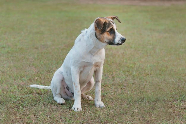 Lindo perro sittng en campo de hierba