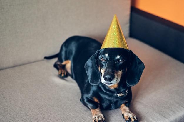 Lindo perro con sombrero de fiesta. feliz cumpleaños aniversario. retrato de perro salchicha marrón negro celebrando un año nuevo