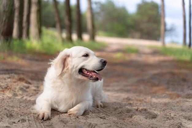 Lindo perro sonriente al aire libre