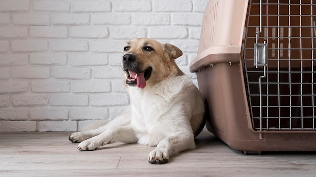 Lindo perro sonriente cerca de la perrera