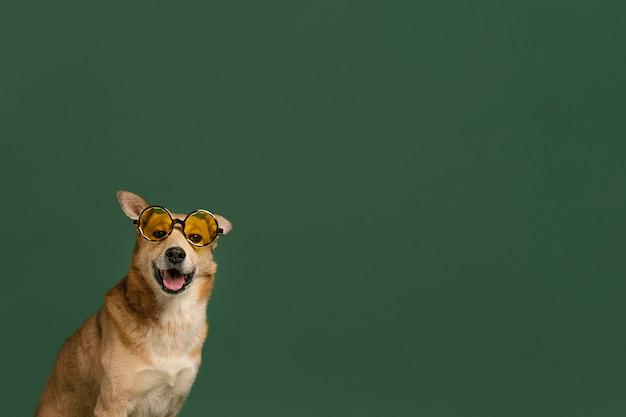 Lindo perro sonriente con espacio de copia