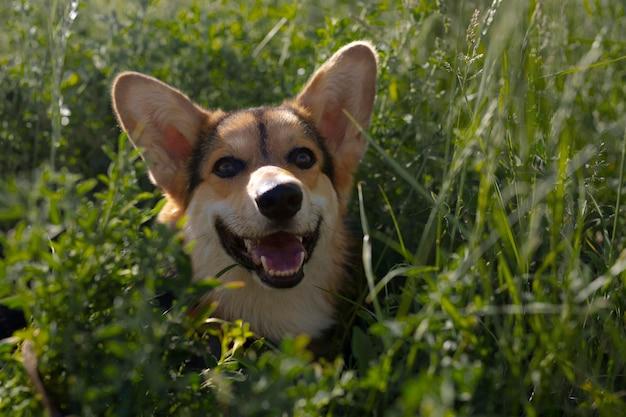 Lindo perro sonriente en la naturaleza