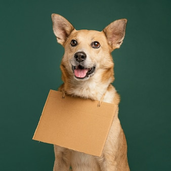 Lindo perro sonriente sosteniendo pancarta vacía