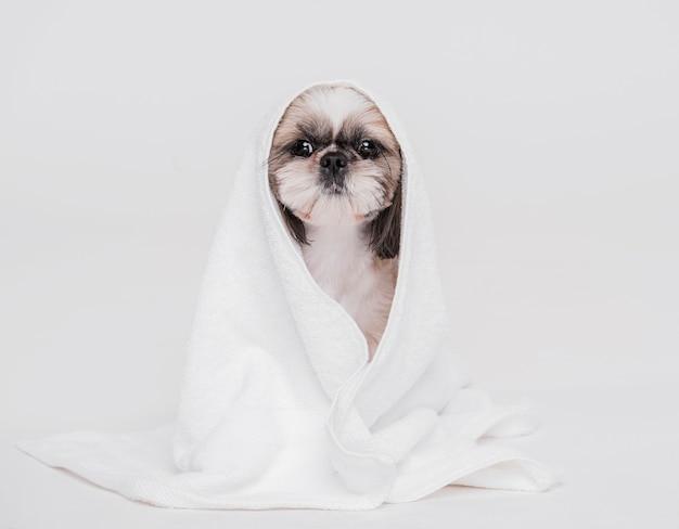 Lindo perro con una toalla