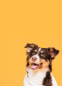 Lindo perro en una toalla