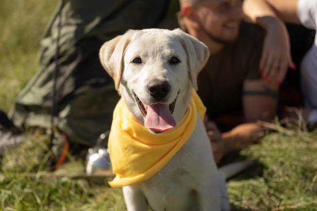 Lindo perro vista frontal con pañuelo amarillo