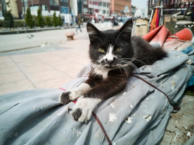 Un lindo retrato de gato descansando