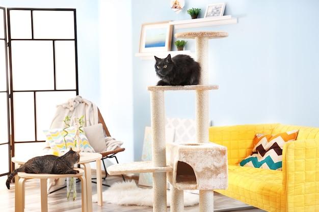 Lindos gatos y árbol de gato en habitación moderna