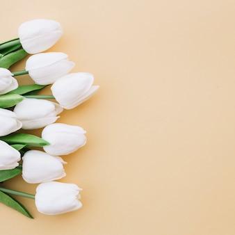Lindos tulipanes sobre fondo amarillo con espacio a la derecha