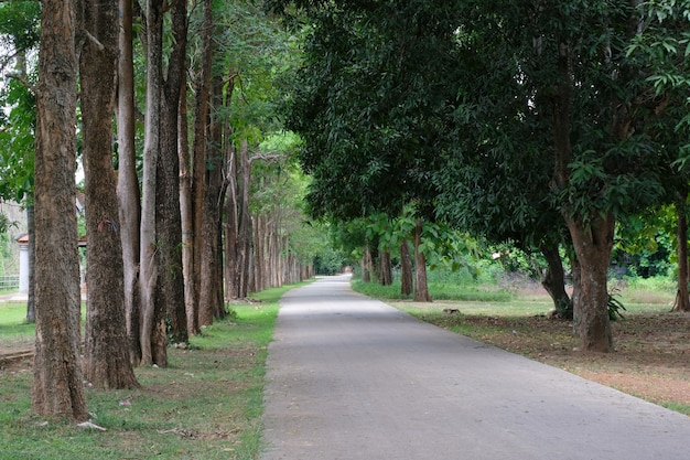 Línea de árboles country road en la mañana
