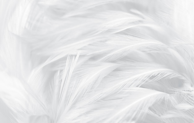 Línea de textura vintage de plumas blancas y grises de hermosa suavidad