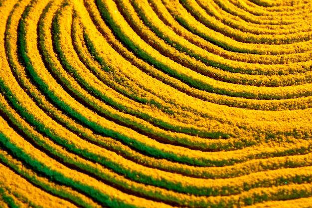 Líneas circulares de arena amarilla.