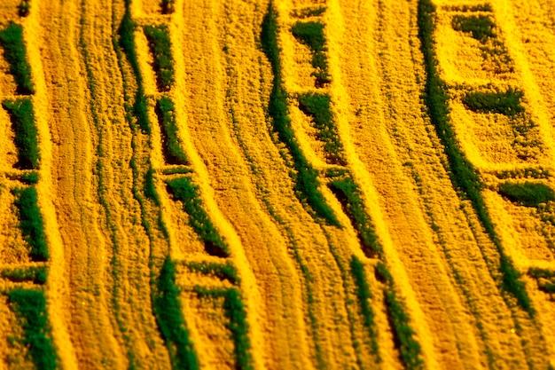 Líneas curvas de arena amarilla.