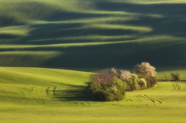 Líneas de puesta de sol y olas con árboles en la primavera