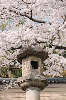 Linterna antigua y flor de sakura