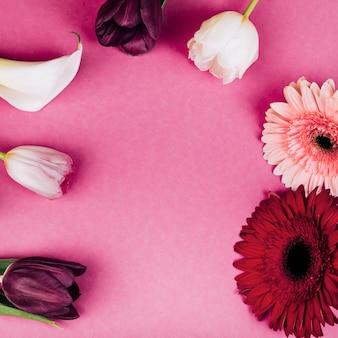 Lirio de arum blanco delicado; tulipanes flores de gerbera sobre fondo rosa