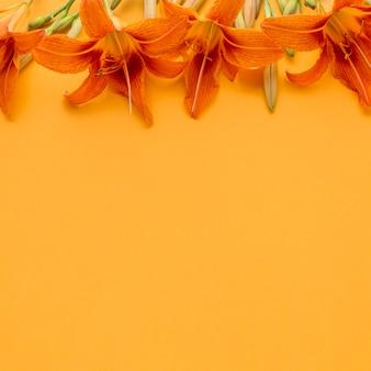 Lirios planos y naranjas con espacio de copia