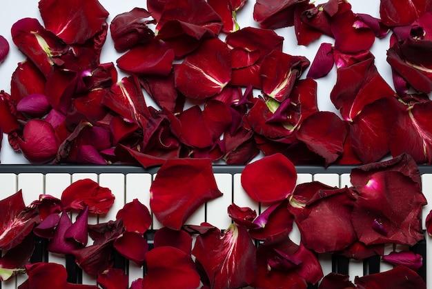 Llaves del piano derramadas con los pétalos color de rosa, visión aislada, superior, espacio de la copia.