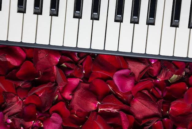 Llaves del piano con los pétalos color de rosa rojos, visión aislada, superior, espacio de la copia. concepto romantico