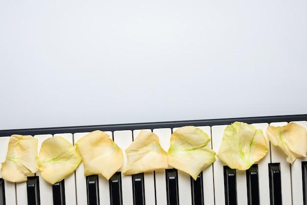 Llaves del piano con los pétalos de la flor de la rosa del blanco, visión aislada, superior, espacio de la copia.