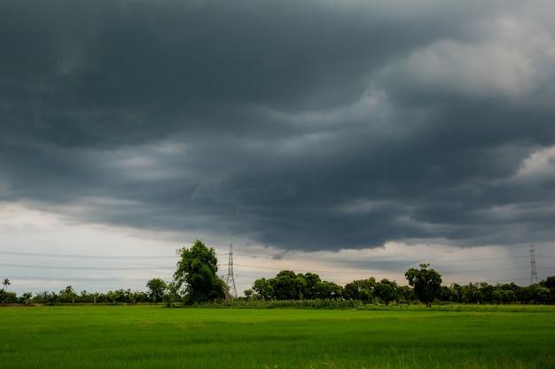 Lluvia en los campos