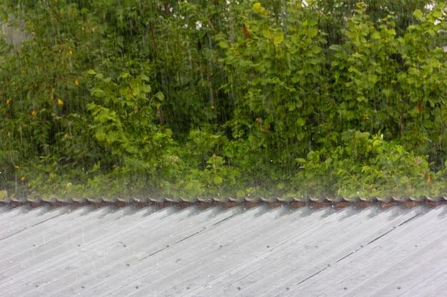 Lluvia de verano en el fondo de follaje verde y granizo que golpea el techo de metal