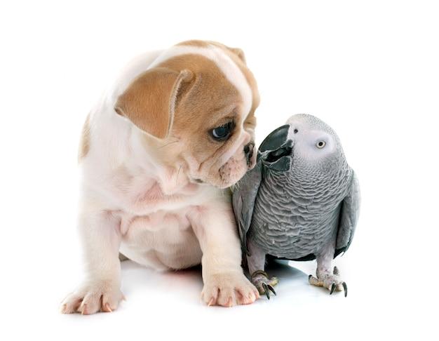 Loro y cachorro