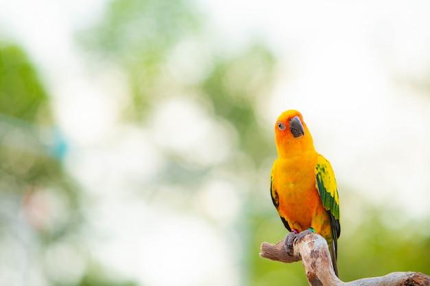 Loro canino y lindo pájaro