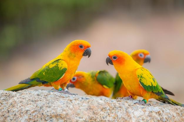 Loro canino y pájaro lindo