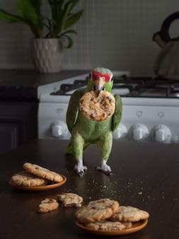 Loro con galletas. un gran loro verde se sienta en una mesa con galletas de mantequilla