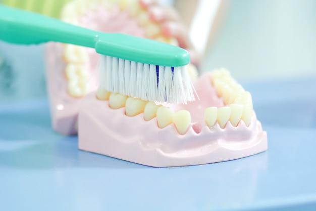 Los dientes modelan cómo limpiar los dientes con un cepillo de dientes verde
