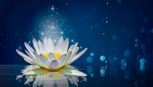 Lotus blanco luz púrpura luz flotante chispa