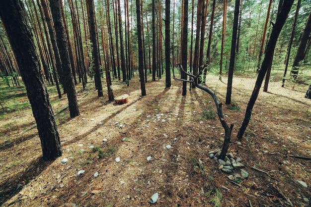 Lugar de rito misterioso en maderas oscuras.